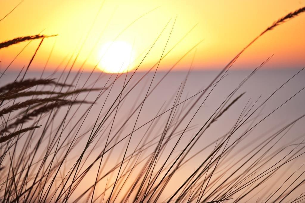 HR-RGB-NEWS-Sunset-Grass-13127-1373